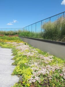 Rooftop garden with native grasses