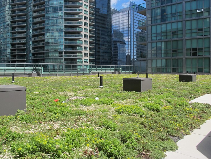 Green Roof system on rooftop in urban core
