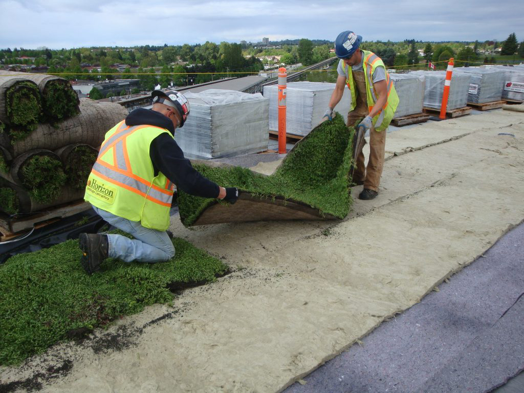 Two installers laying down vegetated mat on rock mineral underlayers on highrise flat rooftop.