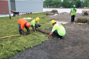 Workers unroll the sedum blanket onto the growing medium.