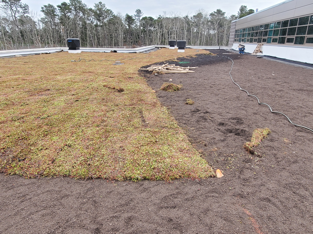 Green roof installation for stormwater management