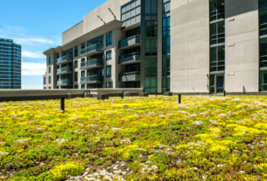 Green roofs in urban areas