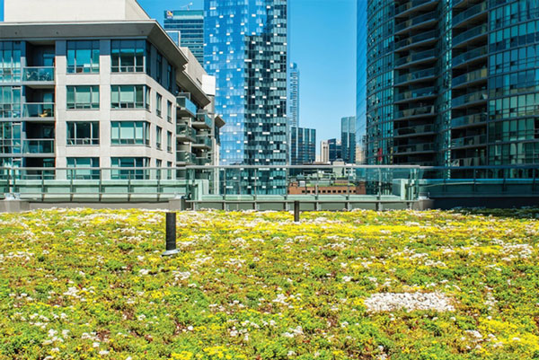 Green roof shown in foreground surrounded by tall skyscapers in urban setting.