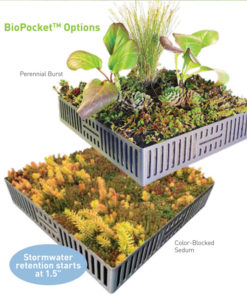 Image of biopocket sedum and custom planting options.